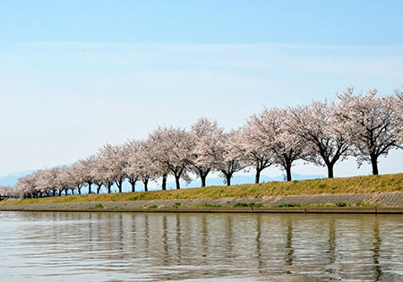 小松市 春