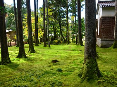 Hiyo Moss Garden