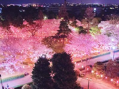 Rojo Park