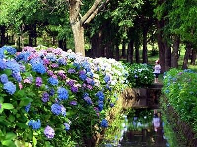 Ikoi-no-mori Park