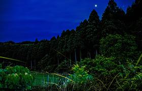 Hiyo Fireflies